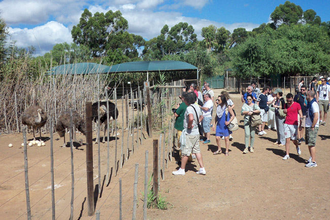 Safari-Ostrich-Farm-Group-Tours-Oudtshoorn-Garden-Route-South-Africa-5
