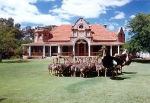 Safari-Ostrich-Farm-Oudtshoorn-Garden-Route-Welgeluk