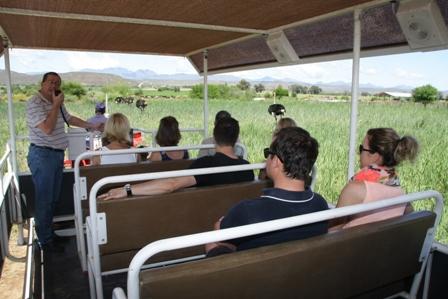 Safari Ostrich Farm, Ostrich Farm Tours in Oudtshoorn, Garden Route