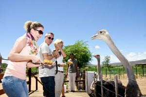 Safari-Ostrich-Show-Farm-Oudtshoorn-Western-Cape-34