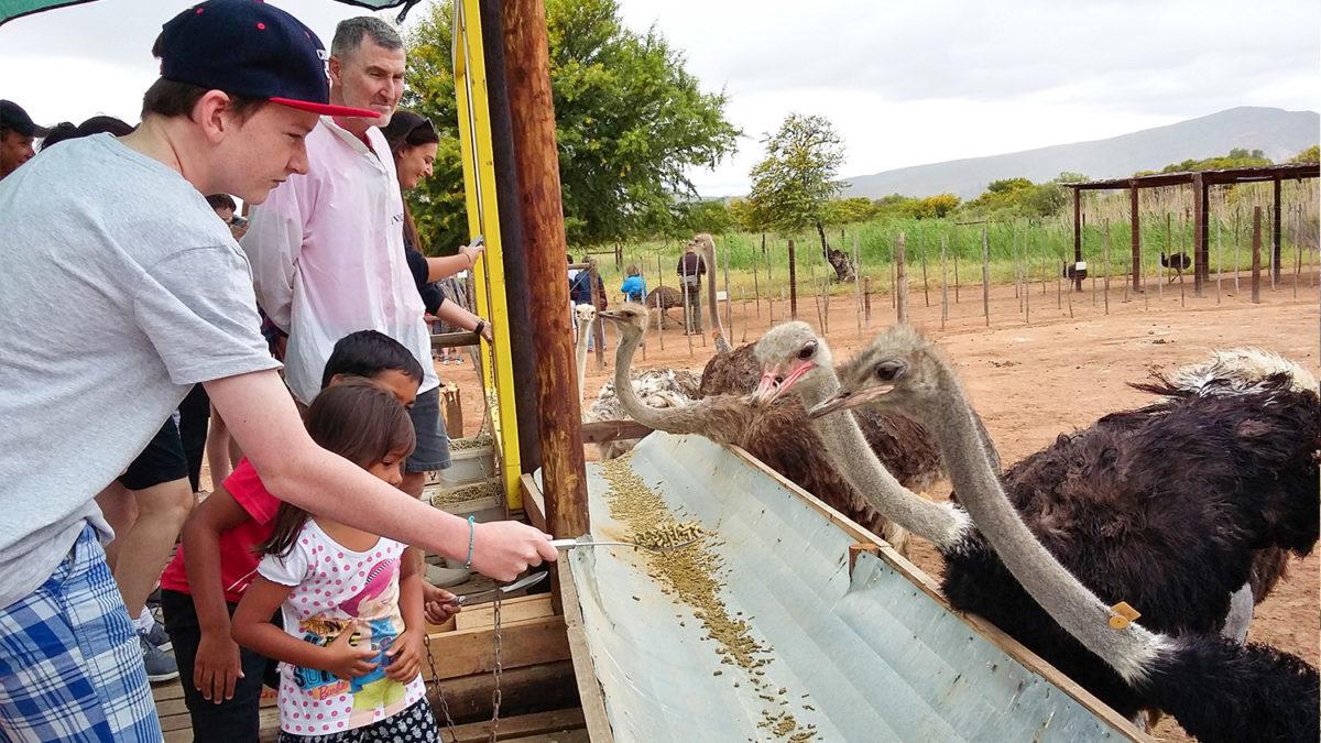 Safari-Ostrich-Farm-Oudtshoorn-Western-Cape-11
